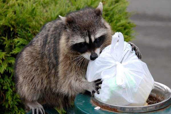 Several Types of Wildlife Can be a Nuisance for Your Family